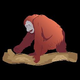 Orangutan monkey illustration orangutan