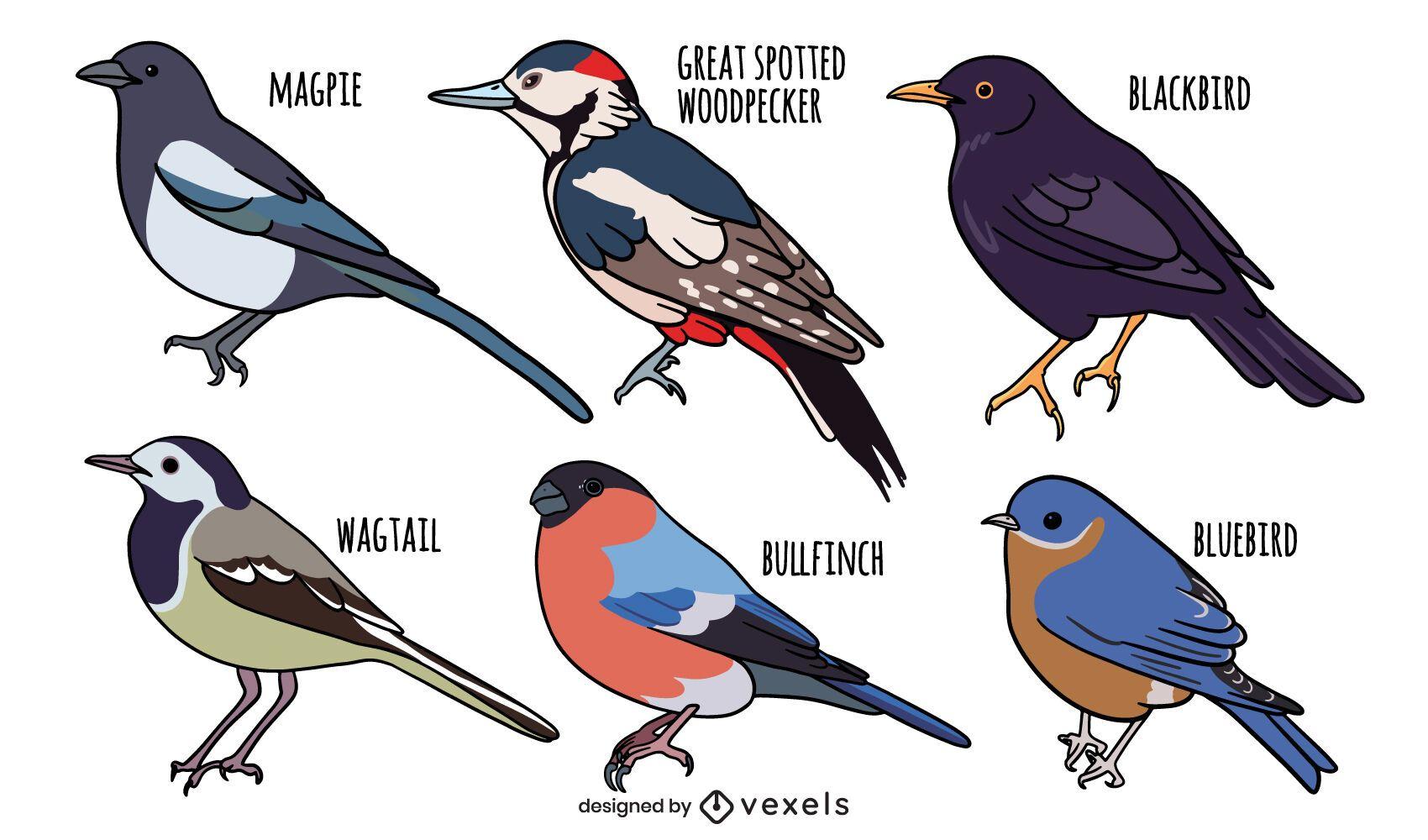 Conjunto de especies de aves