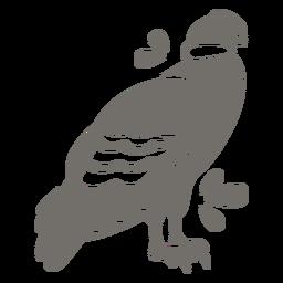 Andean condor monochrome