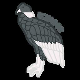 Cóndor andino plano