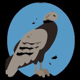 Andes condor flat