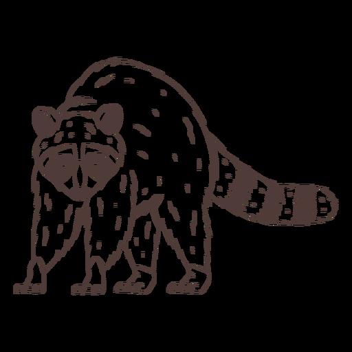 Angry raccoon hand drawn