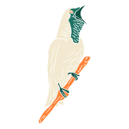 Bare throated bellbird cut out