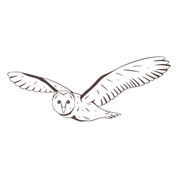 Flying barn owl hand drawn