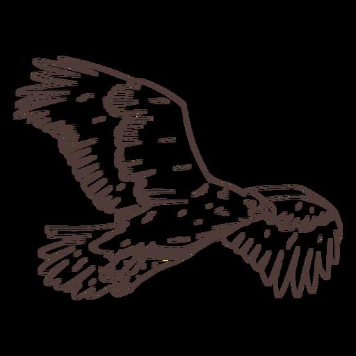 Dibujado a mano águila volando
