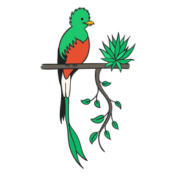 Quetzal guatemala flat