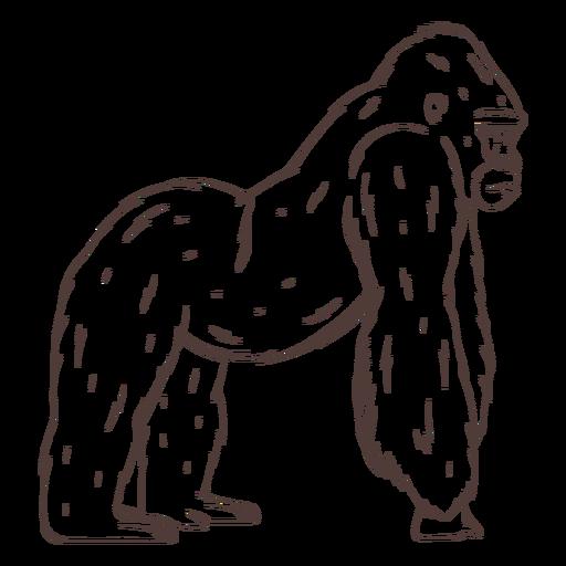 Serious gorilla hand drawn
