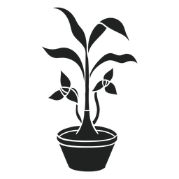 Trilium houseplant cut out