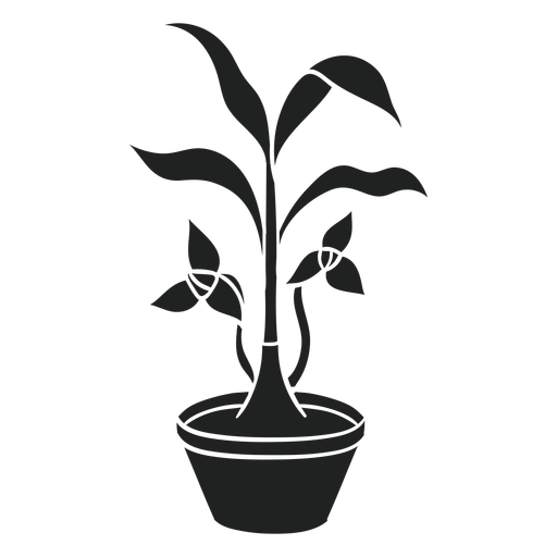 Trilium planta de interior cortada