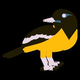 Piso troupial venezolano