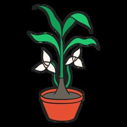 Planta de interior trilium blanco