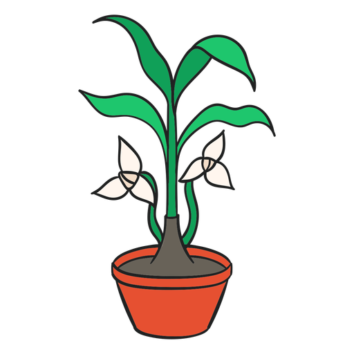 Planta de interior trilium blanco Transparent PNG