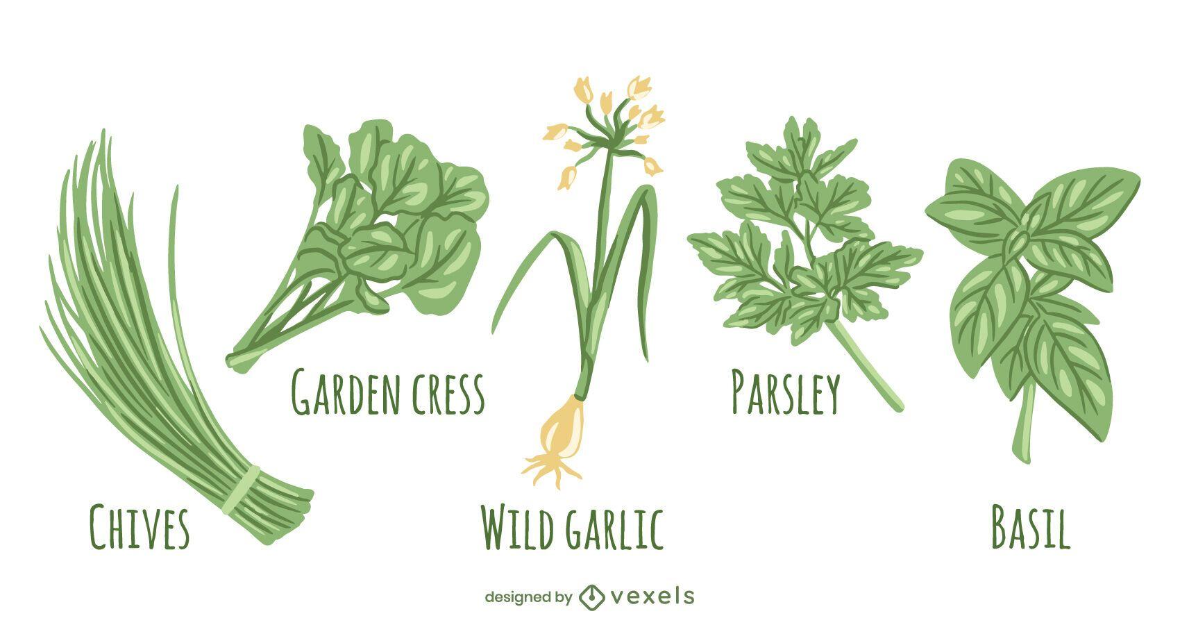 Conjunto de tipos de hierbas