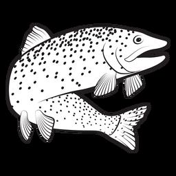 Traça de peixe truta