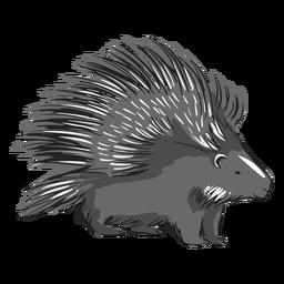 Ilustração de espinhos de porco-espinho