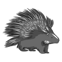 Porcupine spines illustration