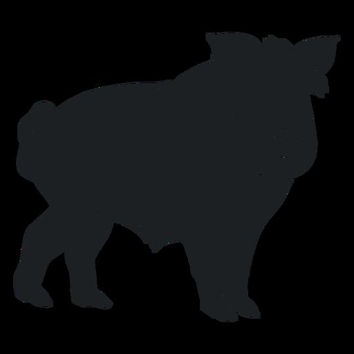 Wild boar watching silhouette