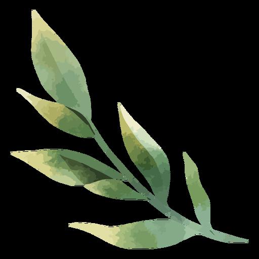 Beautiful watercolor leaves Transparent PNG