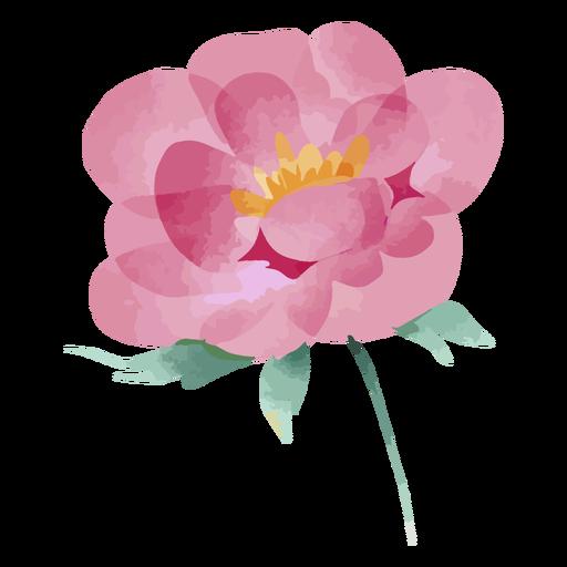 Watercolor pink flower