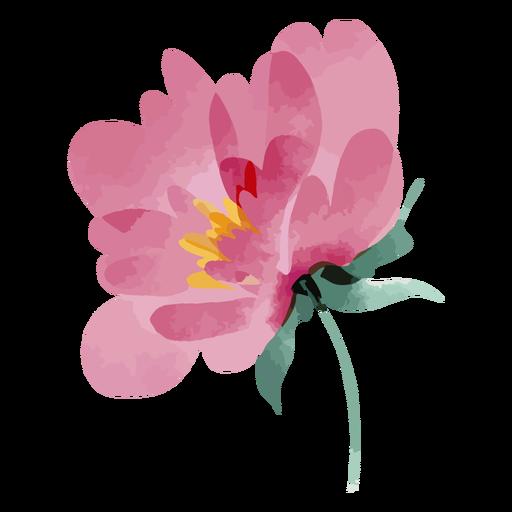 Pink watercolor flower
