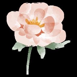 Watercolor flower blooming