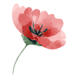 Acuarela flor rosa