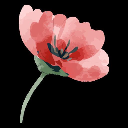 Aquarela rosa desabrochando