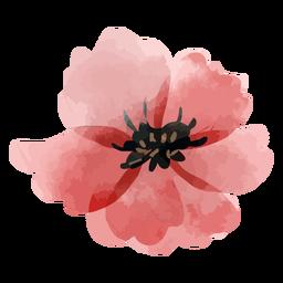Acuarela de pétalos de rosa