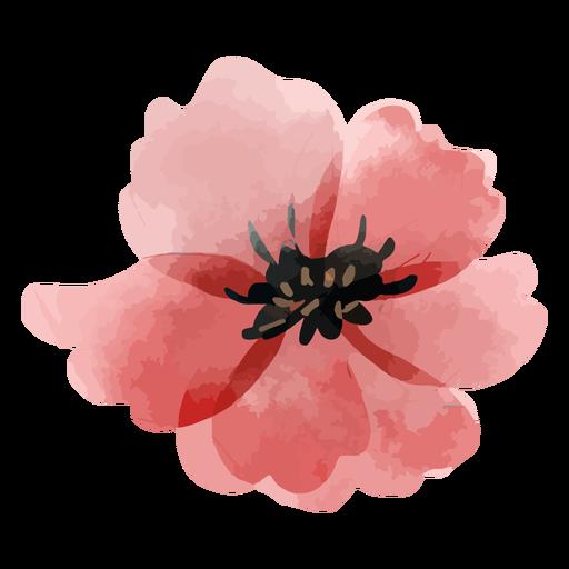 Rose petals watercolor
