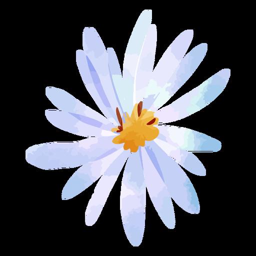 Aster flower watercolor
