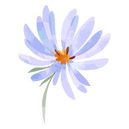 Watercolor aster flower