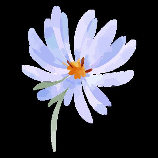 Watercolor aster flower