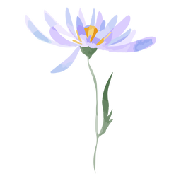 Aster de flores acuarela