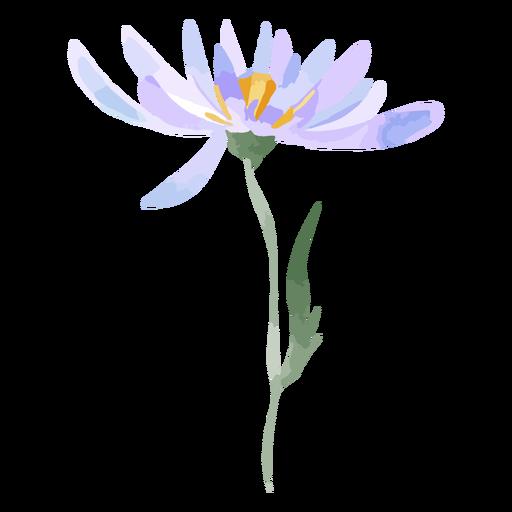 Aquarela de flores aster