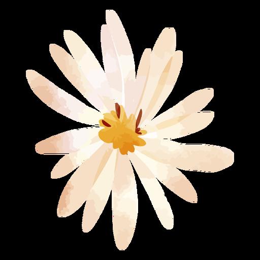Flor de pétalos de aster acuarela