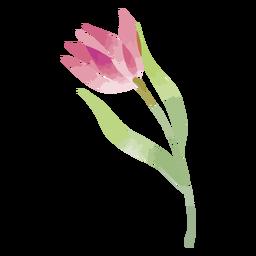 Flor de acuarela magenta