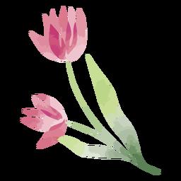 Watercolor magenta flower