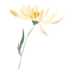 Daisy flower watercolor