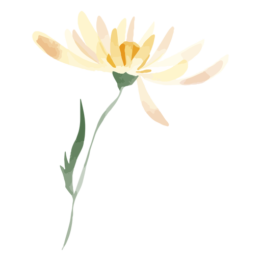 Acuarela de flor de margarita