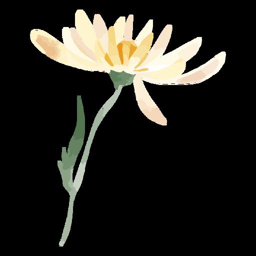 Daisy flower watercolor