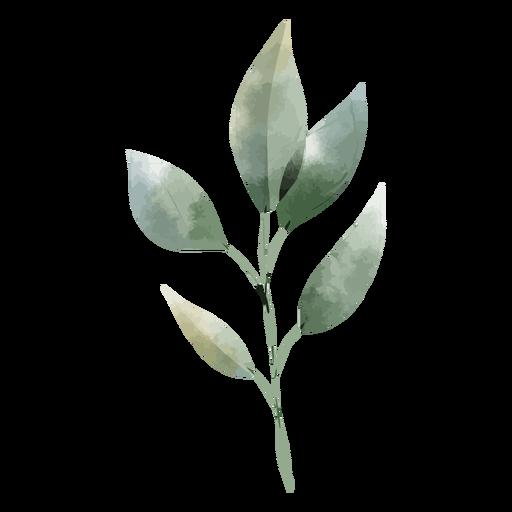 Galho e folhas de aquarela