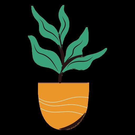 Planta en maceta plana