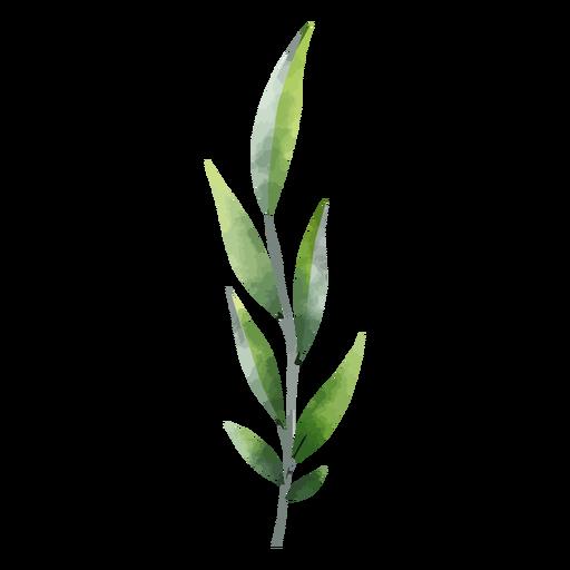 Aquarela de folhas verdes