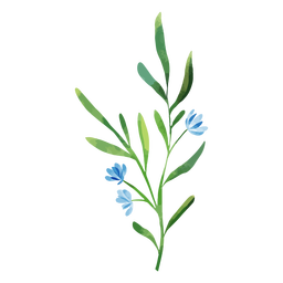 Watercolor branch blue flowers