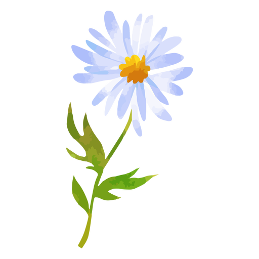 Short stem daisy watercolor