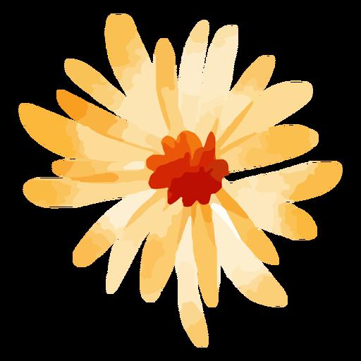 Sunflower flower watercolor