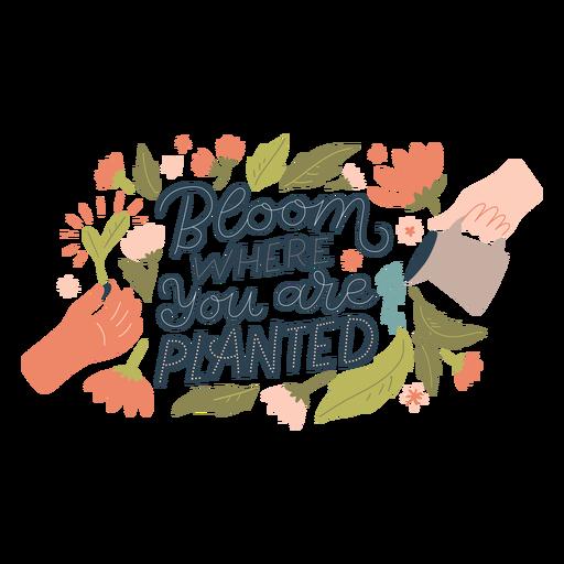 Bloom spring lettering Transparent PNG