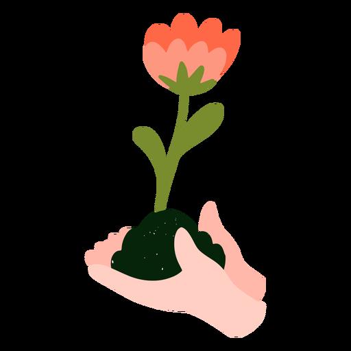 Flower growing flat