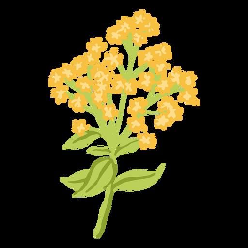 Ramo de flores de acónito amarillo