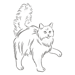 Gato dando golpe de pata